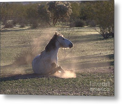 Metal Print featuring the photograph Morning Dust Bath by Ruth Jolly