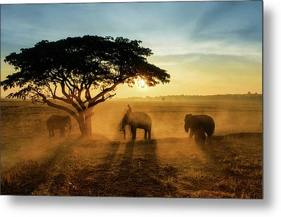 Morning Elephant Home Town Metal Print