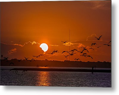 Morning Flight Metal Print