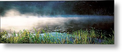 Morning Fog Acadia National Park Me Usa Metal Print