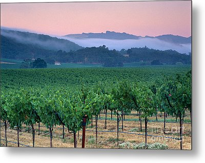 Morning Fog Over Vineyards In The Alexander Valley  Metal Print