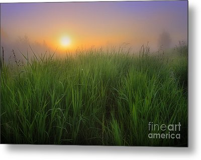 Morning Fresh Metal Print