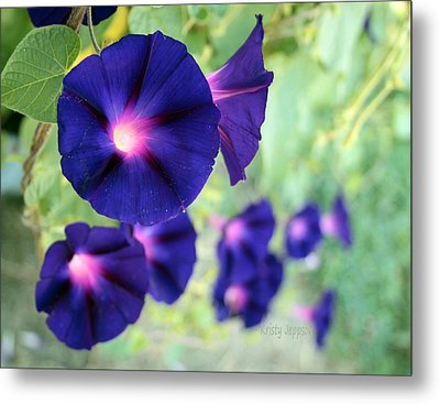 Morning Glory Climbing Metal Print
