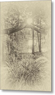 Metal Print featuring the photograph Morning Glory by Margaret Palmer