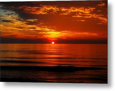 Morning Glory Metal Print by Mim White