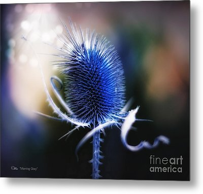 Morning Glory Metal Print by Mo T