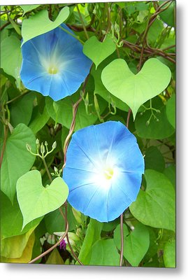 Morning Glory Metal Print by Noreen HaCohen