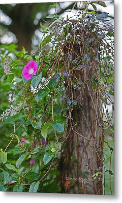 Morning Glory On The Fence Metal Print by Denise Romano