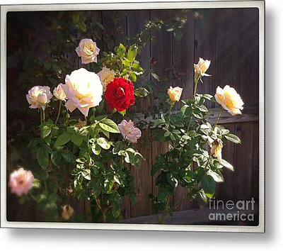Metal Print featuring the photograph Morning Glory by Vonda Lawson-Rosa