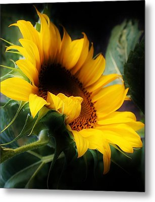 Morning Glow Metal Print by Bruce Bley