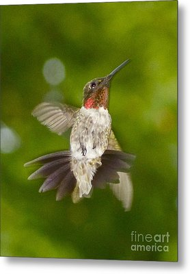 Metal Print featuring the photograph Morning Greeter II by Alice Mainville