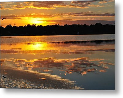 Morning Has Broken Metal Print by Michele Kaiser