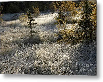 Morning Hoar Frost Metal Print by Jessie Parker