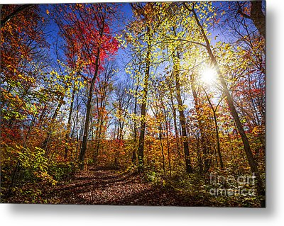 Morning In Autumn Forest Metal Print