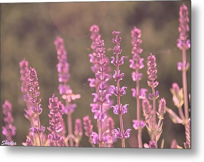 Morning In Pink Metal Print