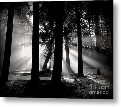 Morning Metal Print