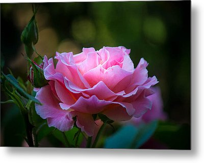 Metal Print featuring the photograph Morning Light by Patricia Babbitt