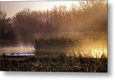 Morning Light Metal Print by Skip Willits
