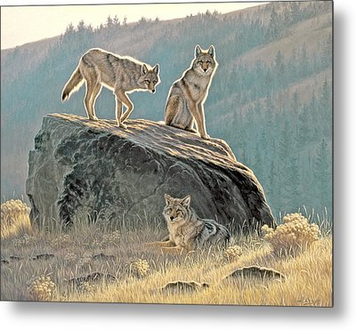 Morning Lookouts Metal Print by Paul Krapf