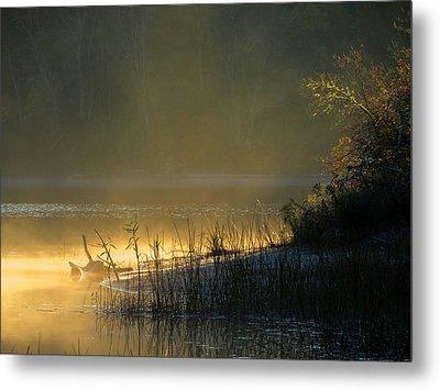 Morning Mist Metal Print by Dianne Cowen