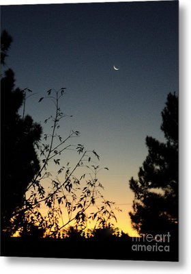 Metal Print featuring the photograph Morning Moonshine by Carla Carson