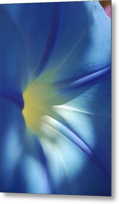 Morning Of Glory Metal Print by Tamyra Crossley