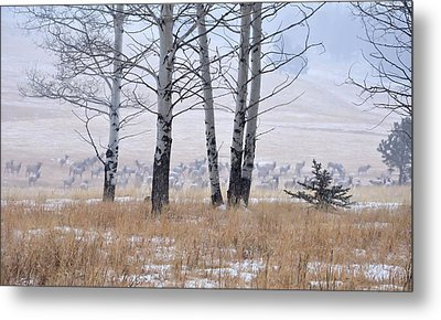 Morning Of The Elk Metal Print