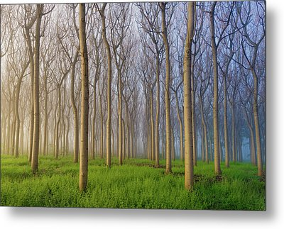 Morning Of The Forest Metal Print by Andy Chan