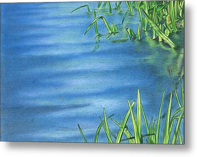 Morning On The Pond Metal Print by Troy Levesque