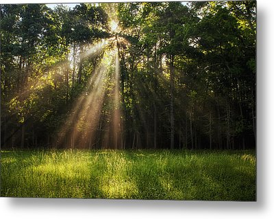 Morning Radiance Metal Print by Andrew Soundarajan