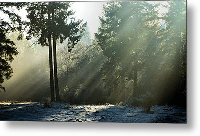 Metal Print featuring the photograph Morning Rays by Julia Hassett