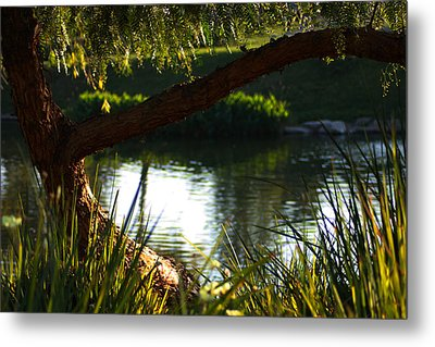 Metal Print featuring the photograph Morning Serenity by Richard Stephen