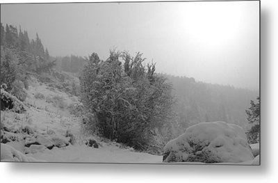 Morning Snow Shower Metal Print