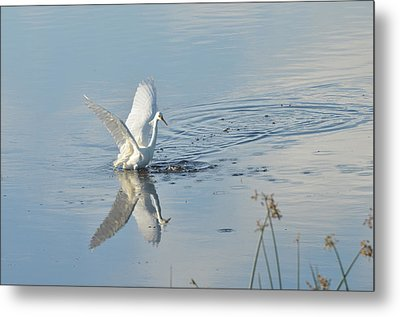 Morning Stretch Metal Print