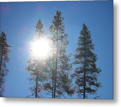 Metal Print featuring the photograph Morning Sun by Jewel Hengen
