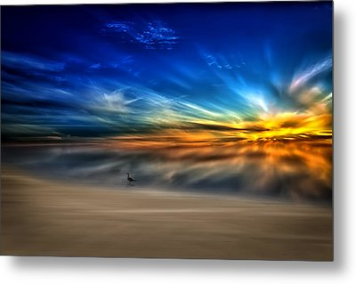Morning Sunrise With A Seagull Metal Print
