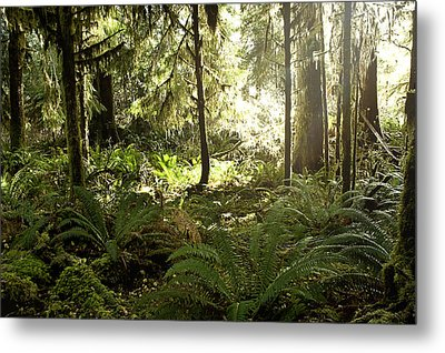 Morning Sunshine In The Forest Metal Print
