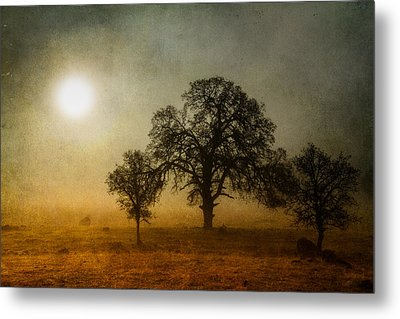 Morning Thaw Metal Print by Randy Wood