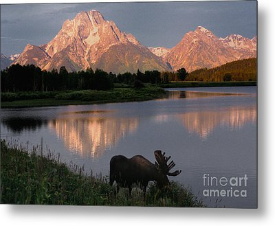 Morning Tranquility Metal Print by Sandra Bronstein