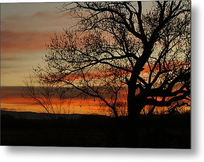 Morning View In Bosque Metal Print