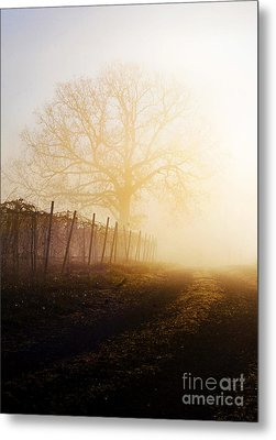 Morning Vineyard Metal Print by Shannon Beck-Coatney