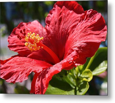 Mornings Delight Metal Print by Bruce Bley