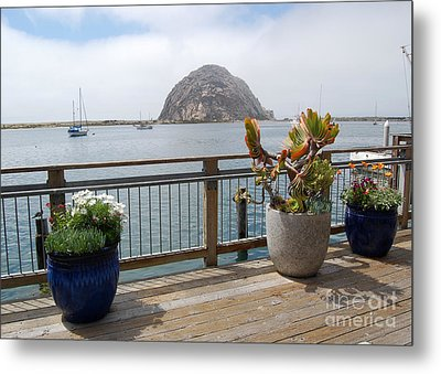 Metal Print featuring the photograph Morro Bay And Plants by Debra Thompson