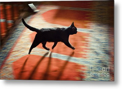 Mosque Cat Metal Print