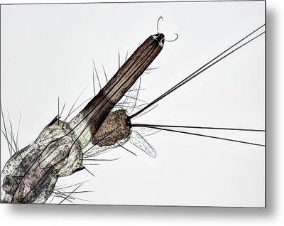 Mosquito Larva Metal Print by Frank Fox