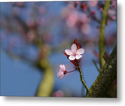 Moss And Blossoms Metal Print by Lisa Knechtel