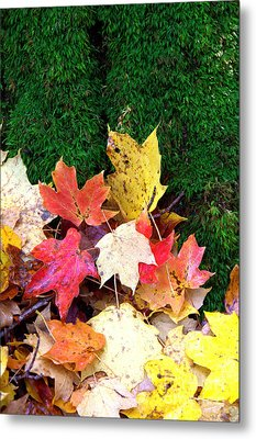 Metal Print featuring the photograph Moss And Leaves by Jim McCain