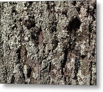 Metal Print featuring the photograph Moss And Lichens by Jason Williamson