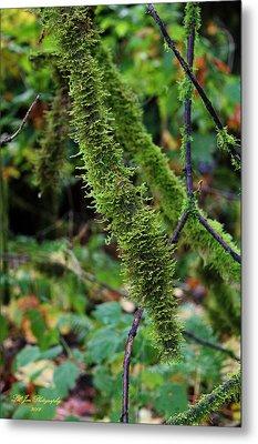 Moss Beauty Metal Print by Jeanette C Landstrom