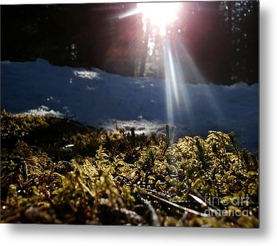 Moss In The Sunlight Metal Print by Steven Valkenberg